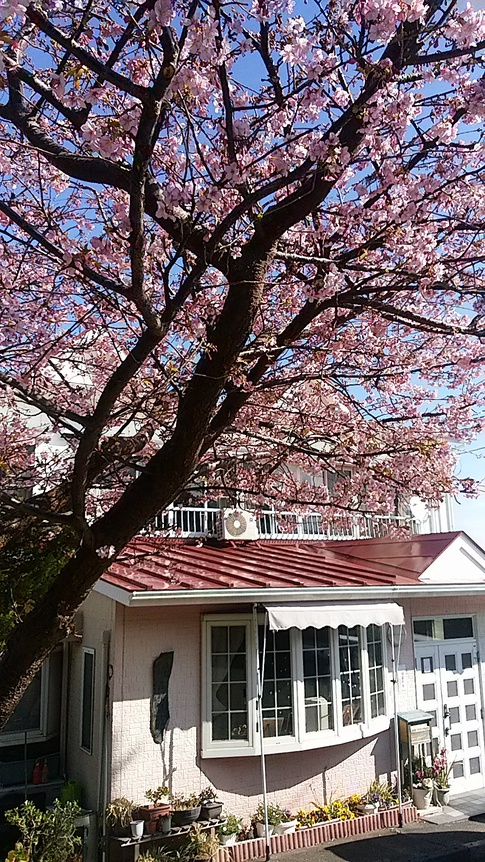 民宿 花の木